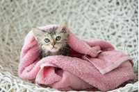 Picture for category Cat Shampoo & Conditioner